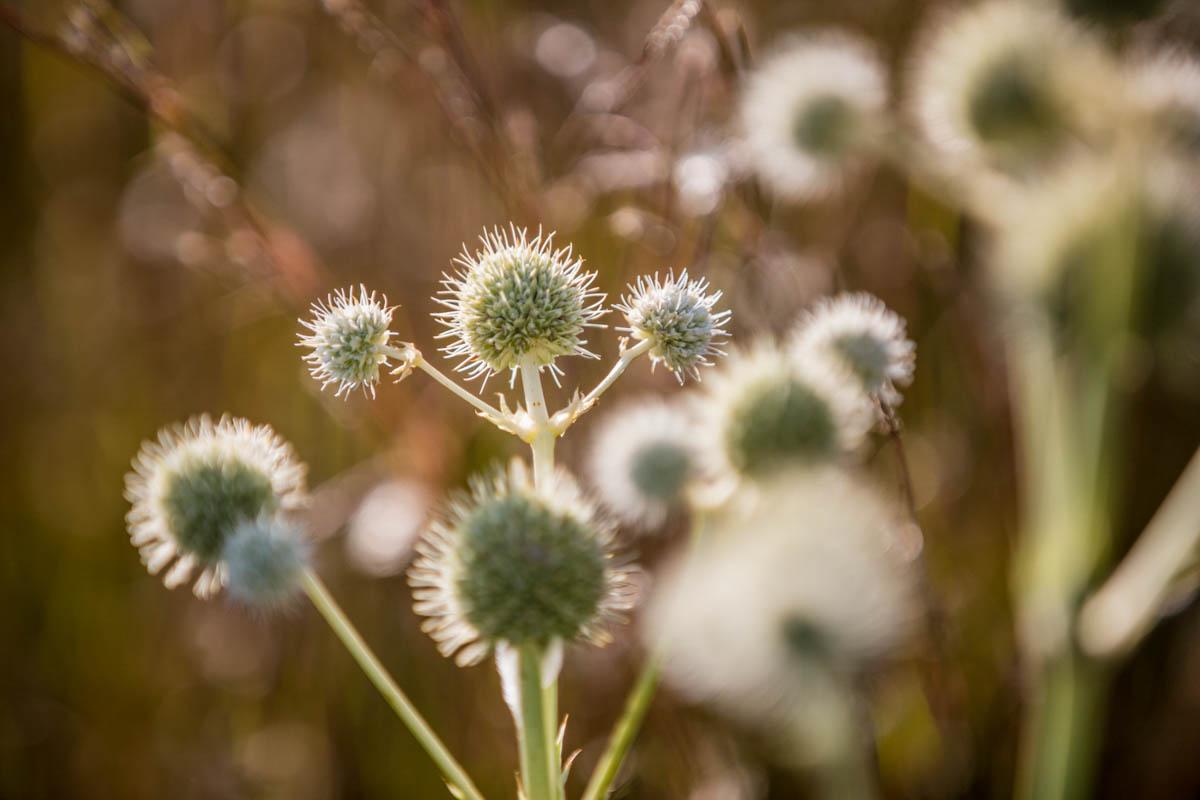 Brian_K_Powers_Photography_Nature_429.jpg