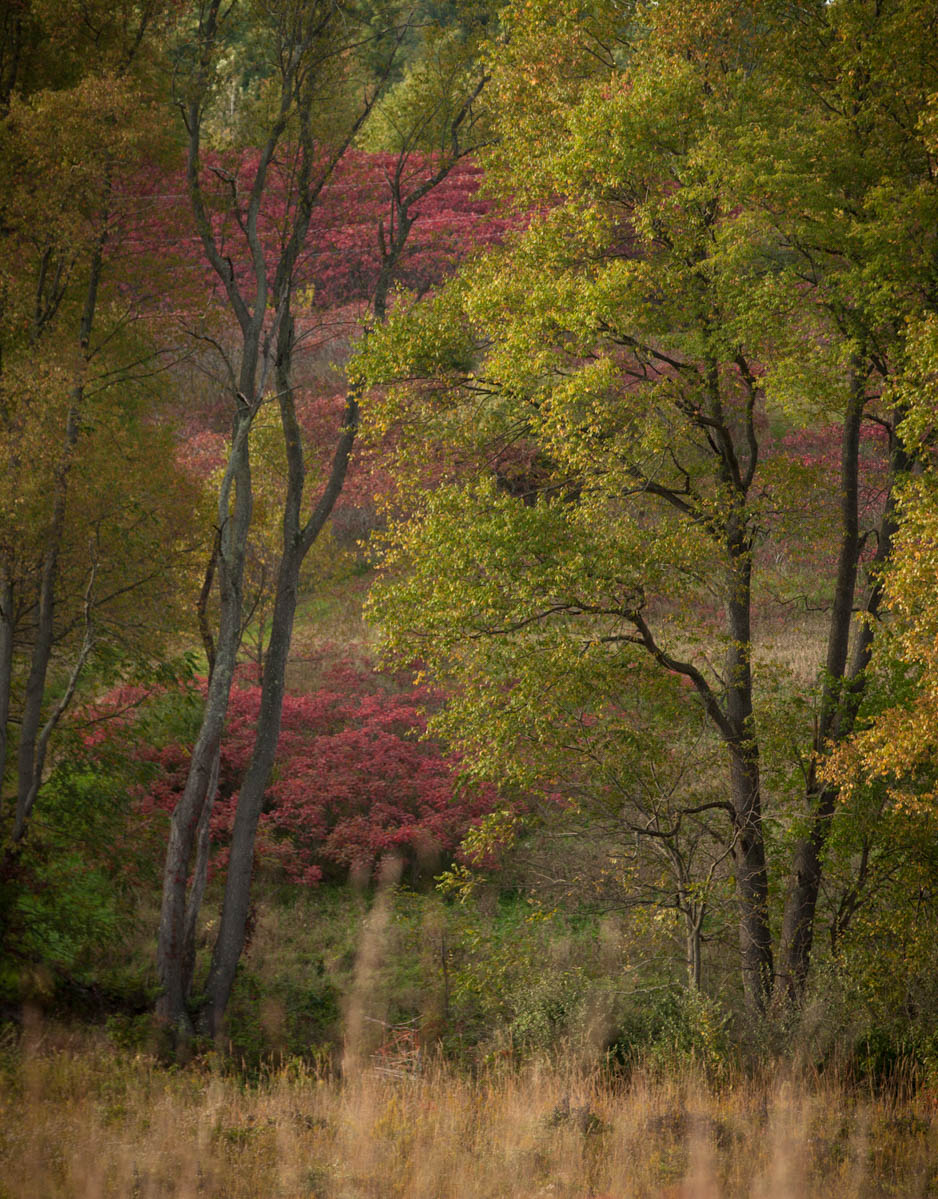 Brian_K_Powers_Photography_Nature_801.jpg