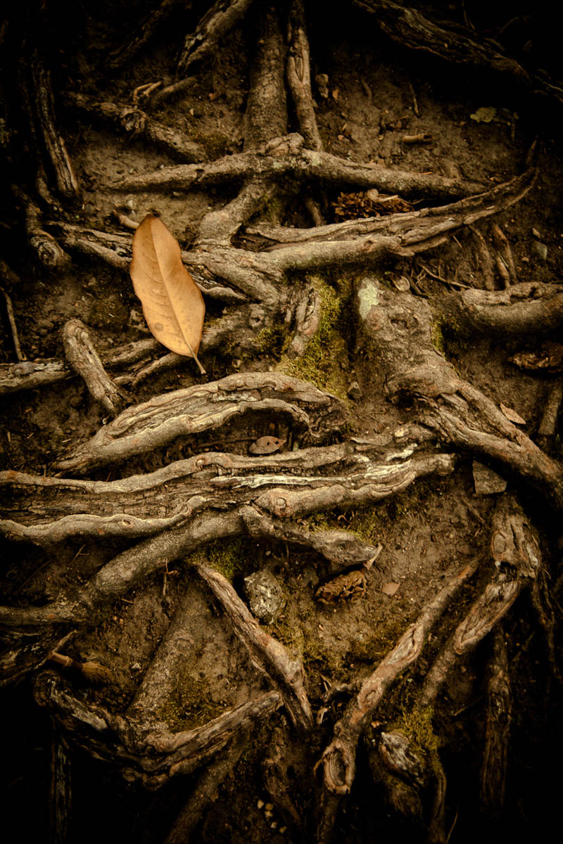Brian_K_Powers_Photography_Nature_889.jpg
