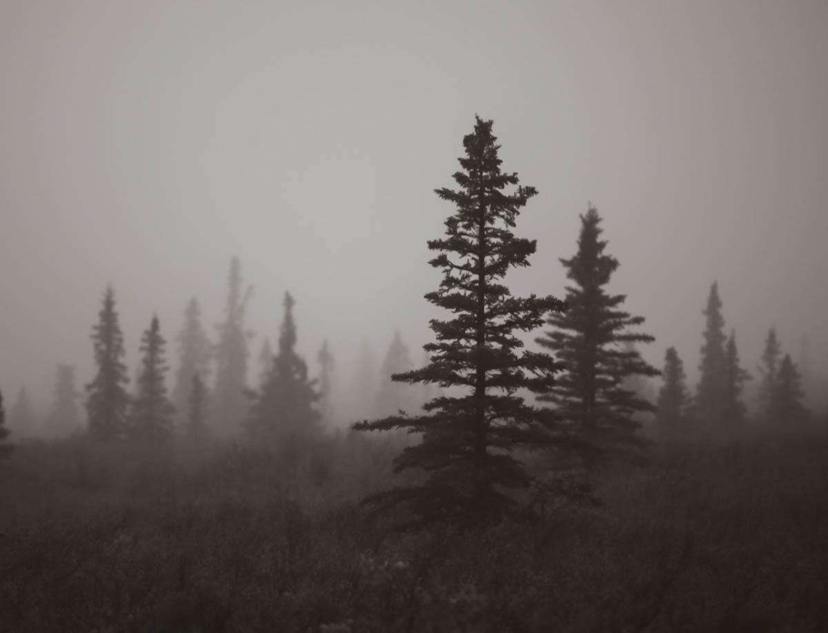 Brian_K_Powers_Photography_Nature_1051.jpg