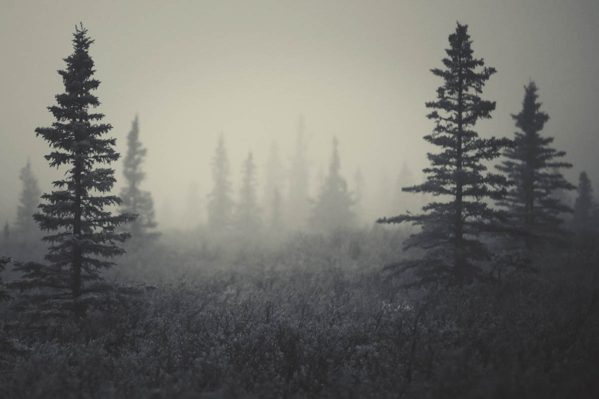 Brian_K_Powers_Photography_Nature_1052.jpg