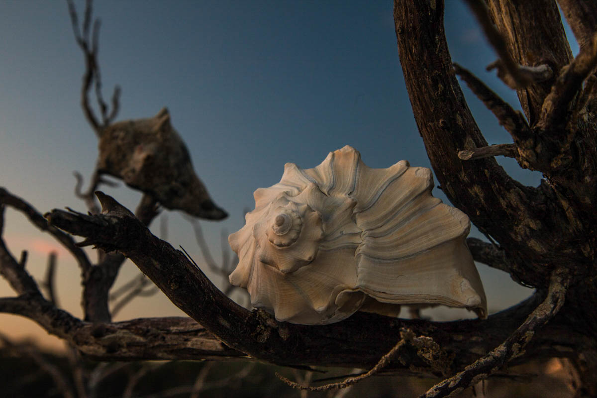 Brian_K_Powers_Photography_Nature_1087.jpg