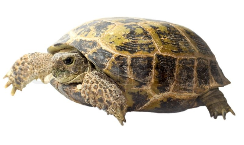 Desert Tortoise, Box Turtle, Sulcata, Bearded Dragon… - We keep in stock a variety of products for our reptilian friends! In addition, we have a turtle expert in house! If you have questions, we can help. Give us a call or stop in to discuss nutrition, hibernation, etc.