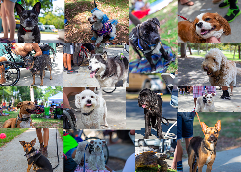 The dogs of the All Clubs BBQ. Photos by Sam Selfridge.