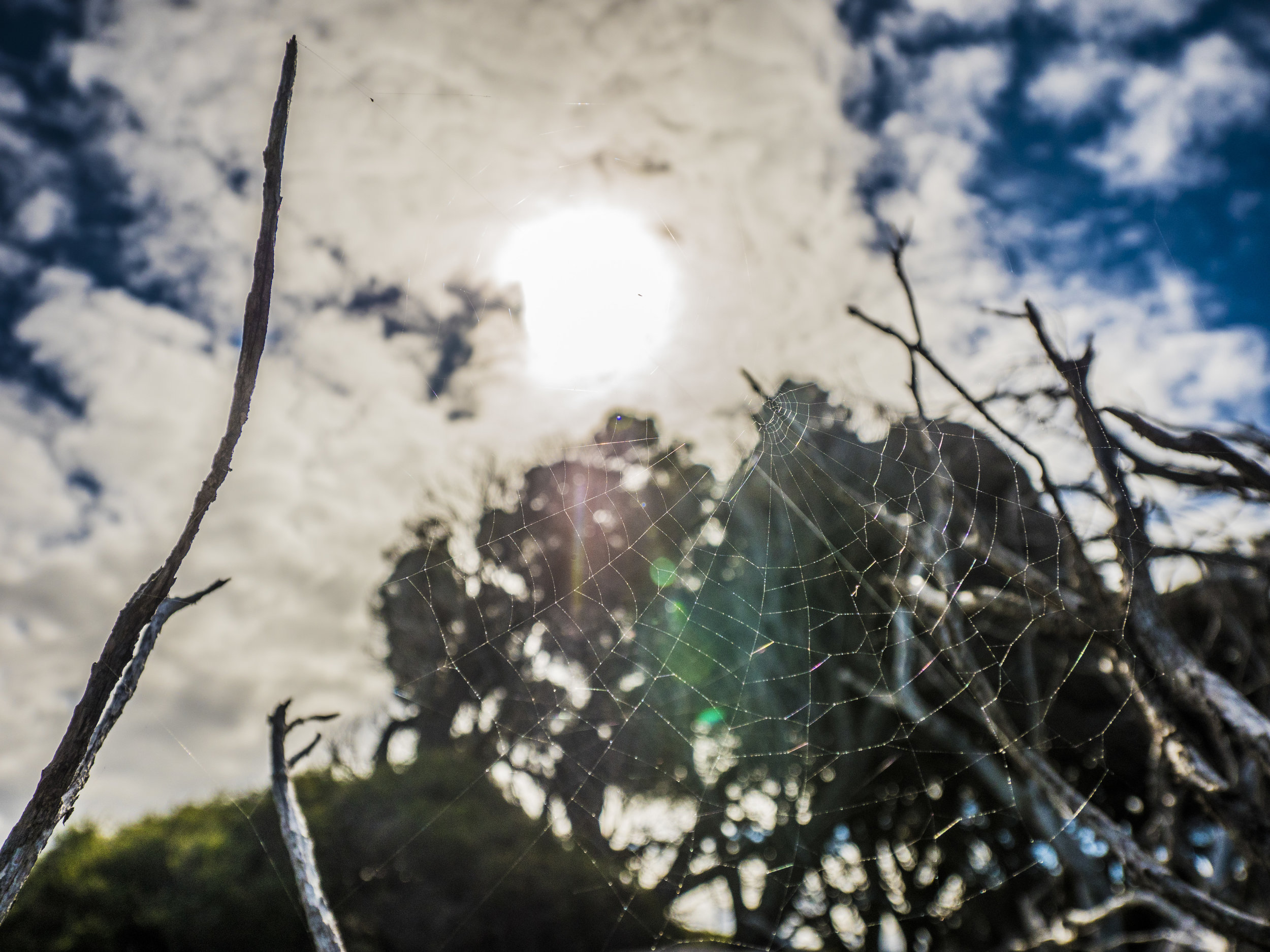 rottsnest spider web close.jpg
