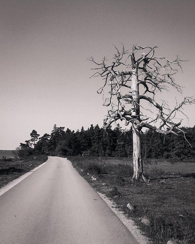 Trädet invid vägen.