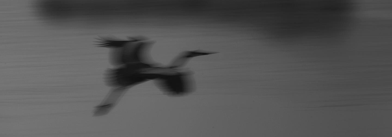 abstract-heron-72.jpg