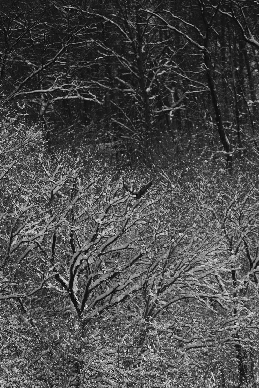 BE-in-snow-72.jpg
