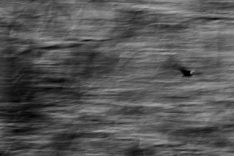 eagle-painting-72.jpg