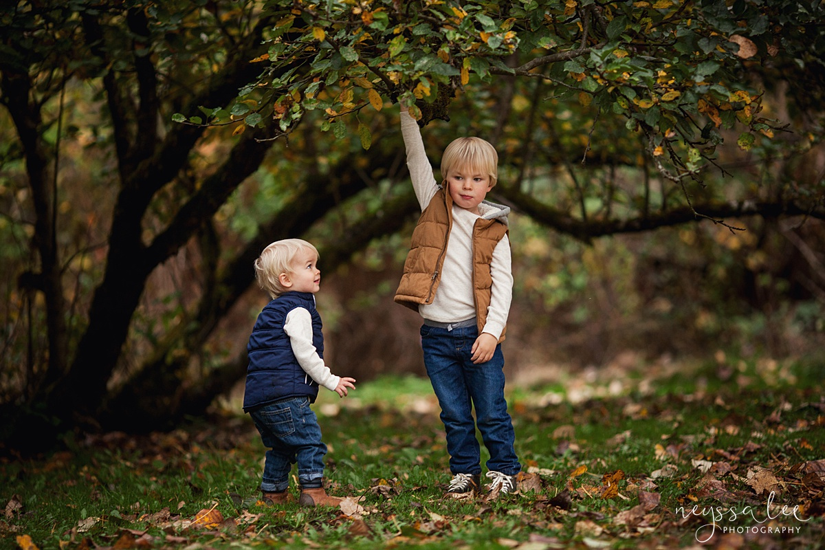 Neyssa Lee Photography, Snoqualmie Family Photographer, Fall Family Photos, Brothers playing in trees