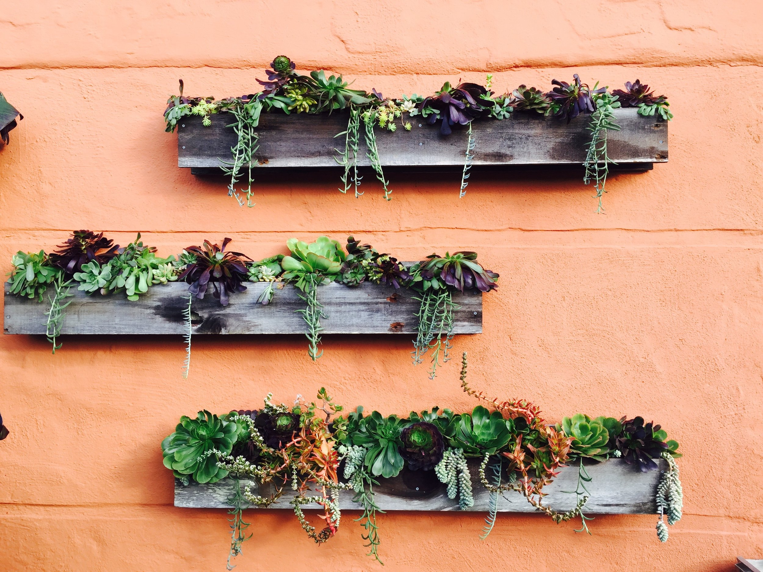 I designed these barn wood outdoor planter boxes and arranged a nice array of succulents.