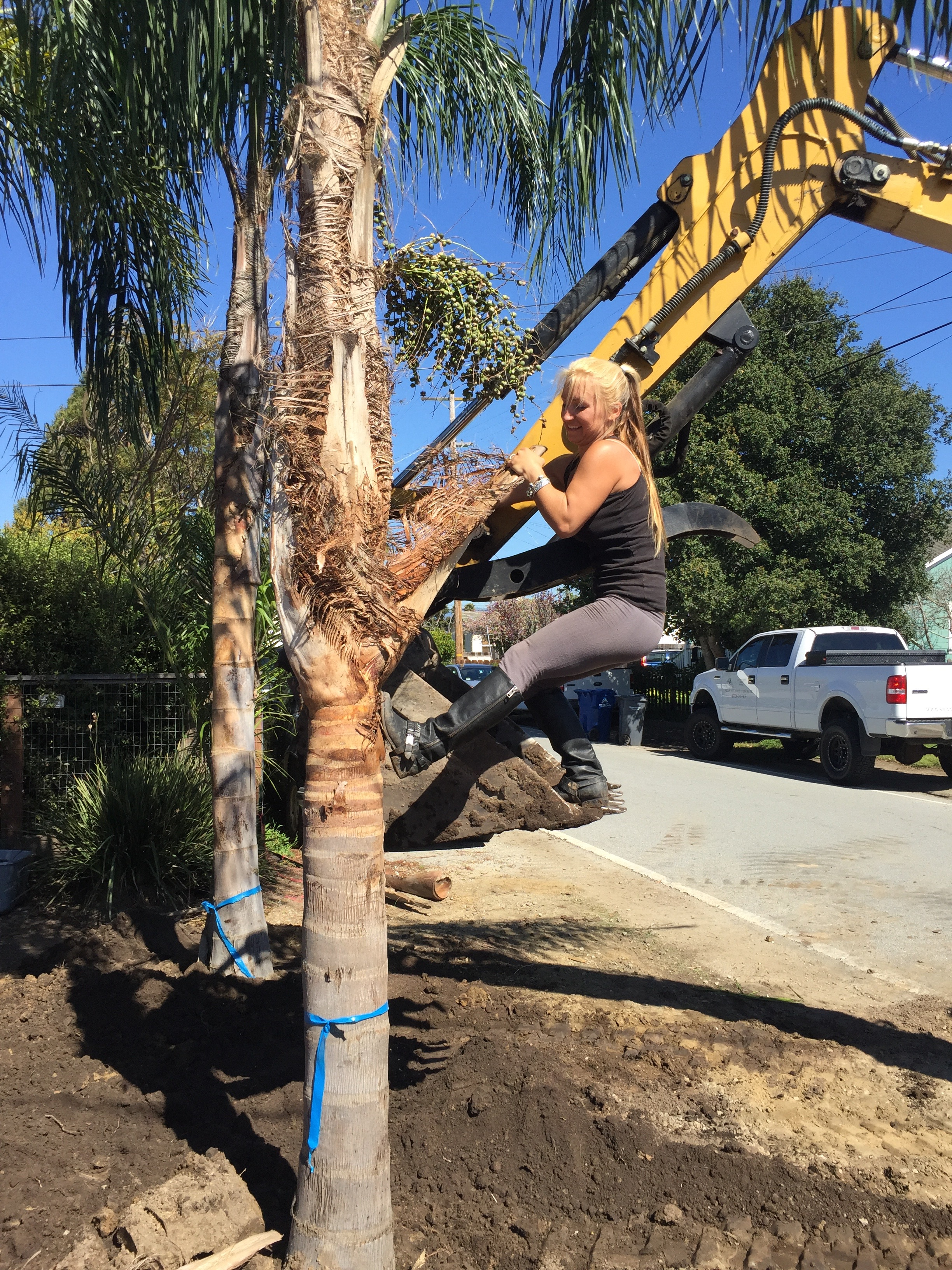 Yes, I actually helped the backhoe driver carefully place all of the mature palms to the inch, and level them.