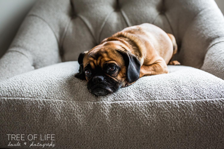 intimate-maternity-session-london-dog