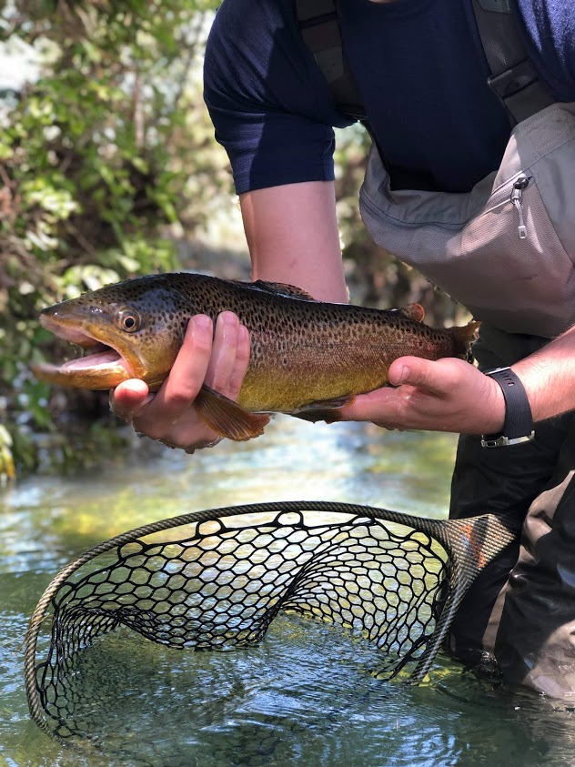 """My 21"""" Brown Trout"""