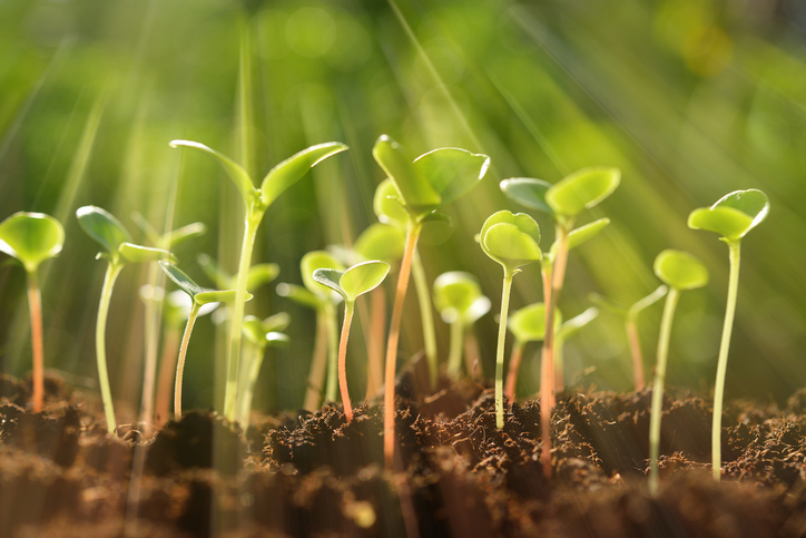 planting seeds of growth in therapy