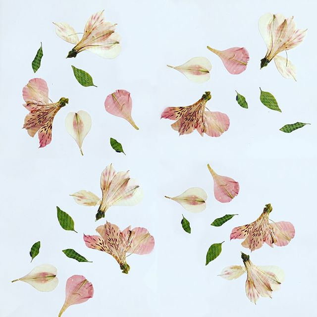 Pressed flowers art project with kids. Might turn into #fabric With @guildery