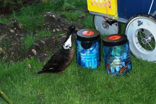 The campground should be renamed Duck Village. These guys run the place and were trying to steal our dinner. Fortunately, our bear proof containers are duck proof too.