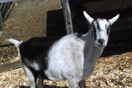 Flirting with Tara. Dirty old goat.