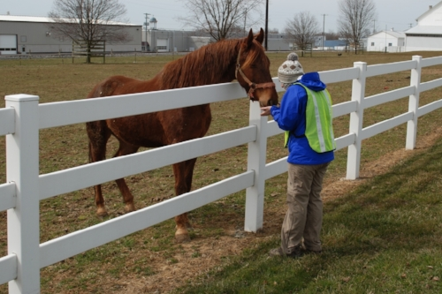 At one farm, a curious horse came up to Tara. She jumped at the opportunity to pet him and let him nibble at her hands.