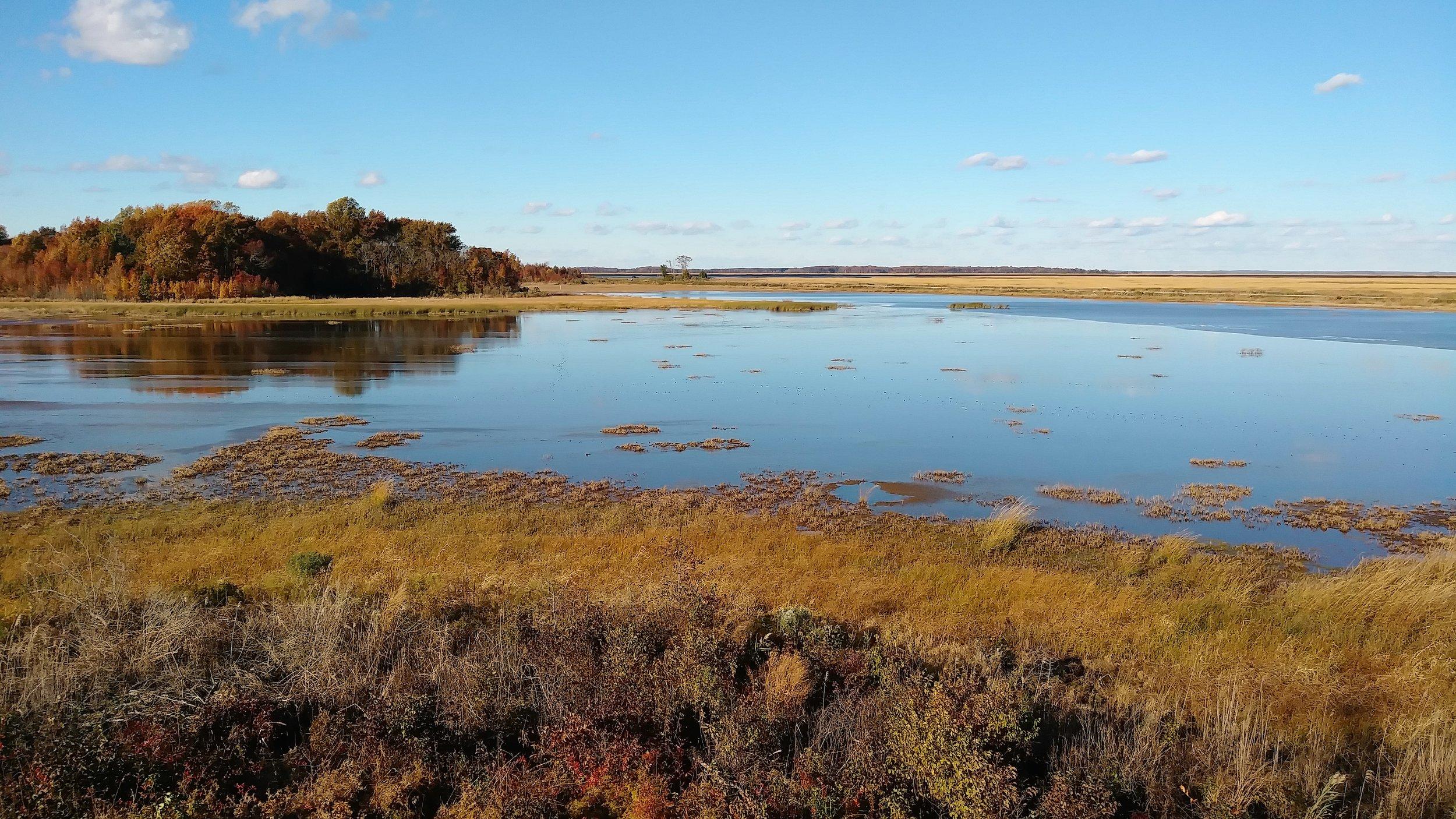 Fall in coastal Delaware.