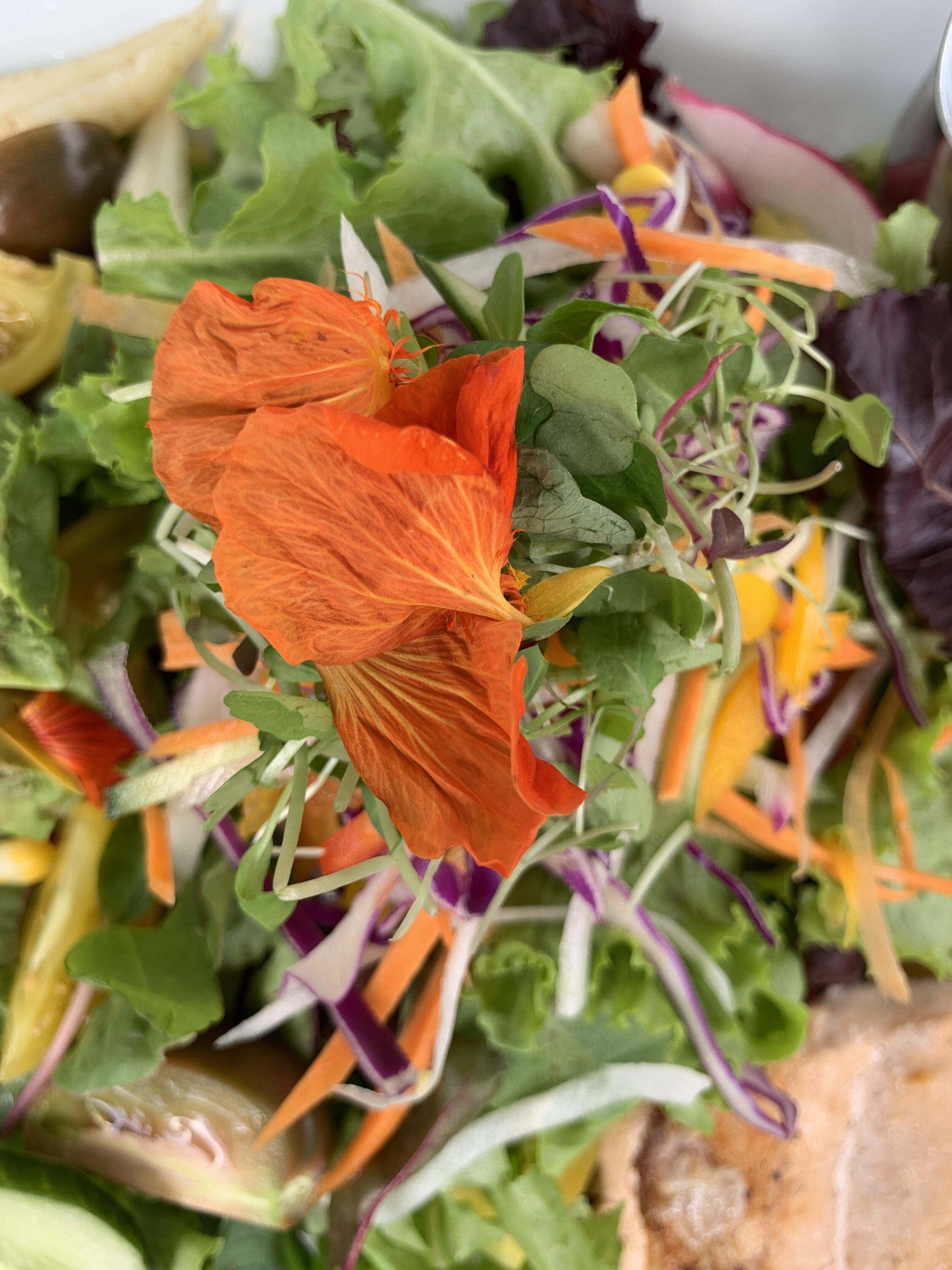 Salad from  Coaba Farms
