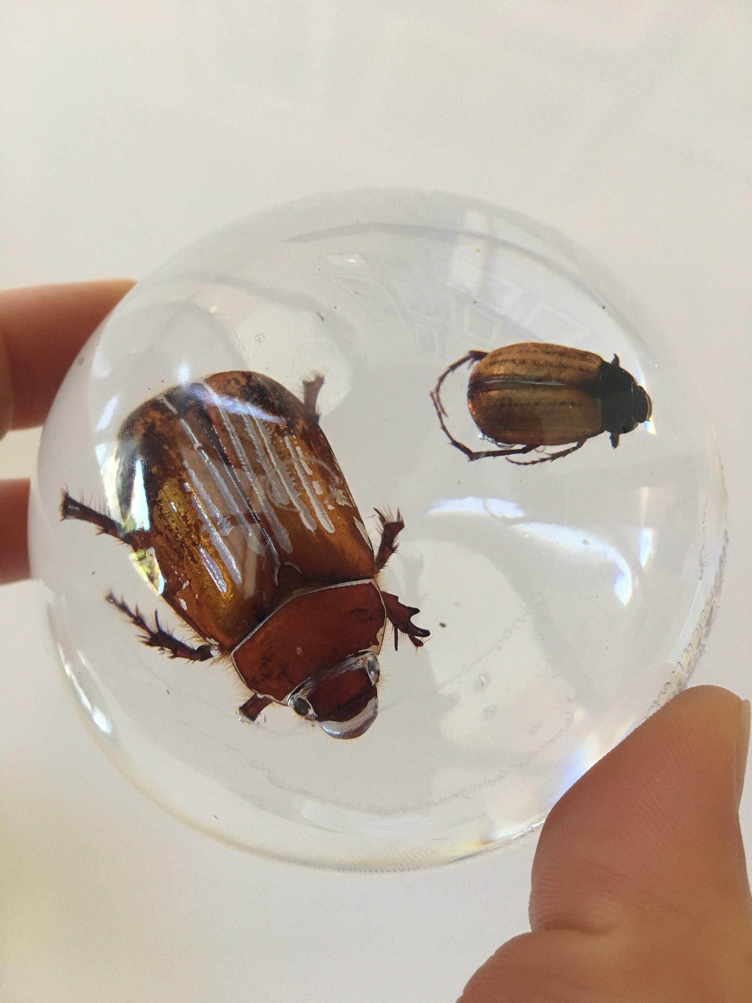 Beetles cast in resin