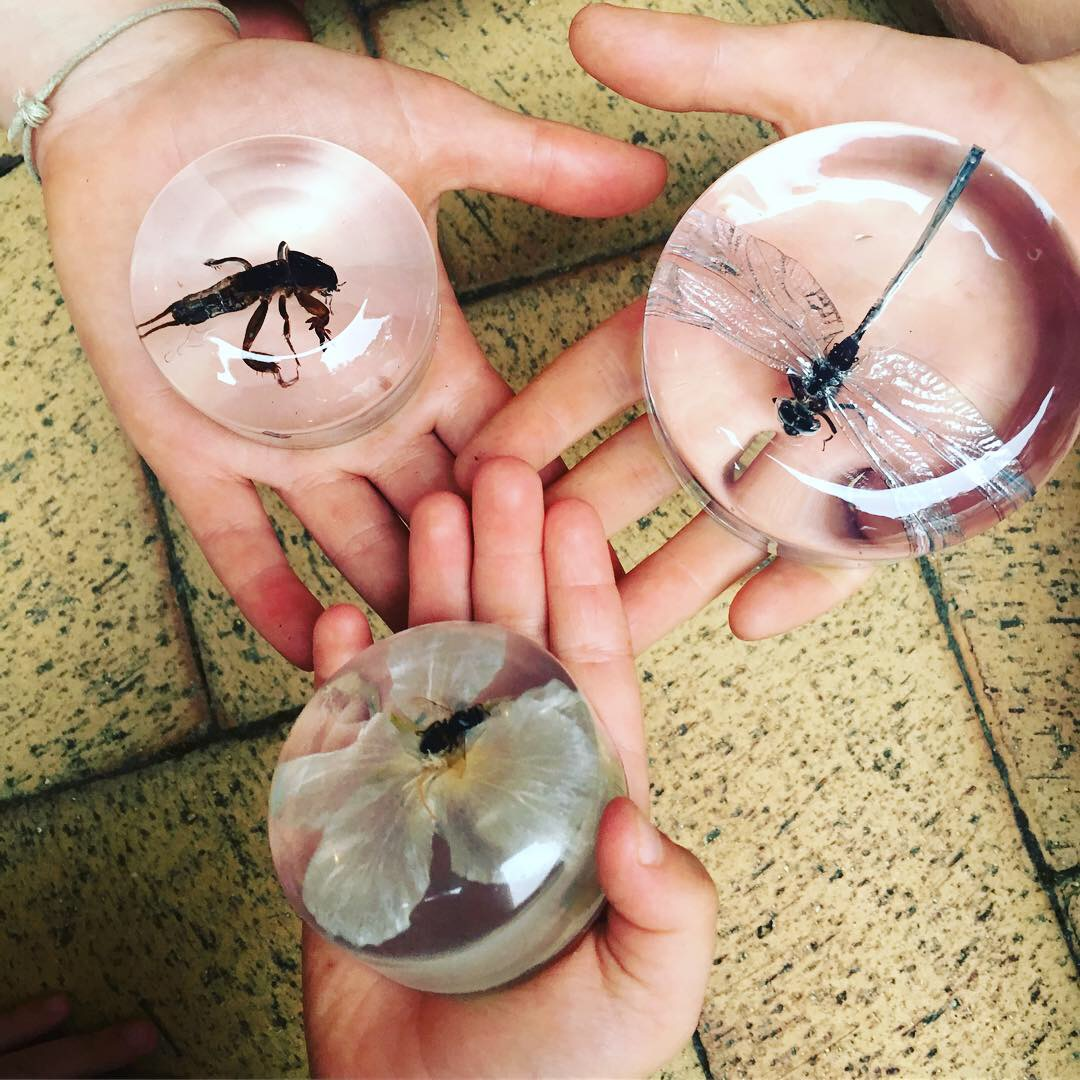 Resin Insect paperweights