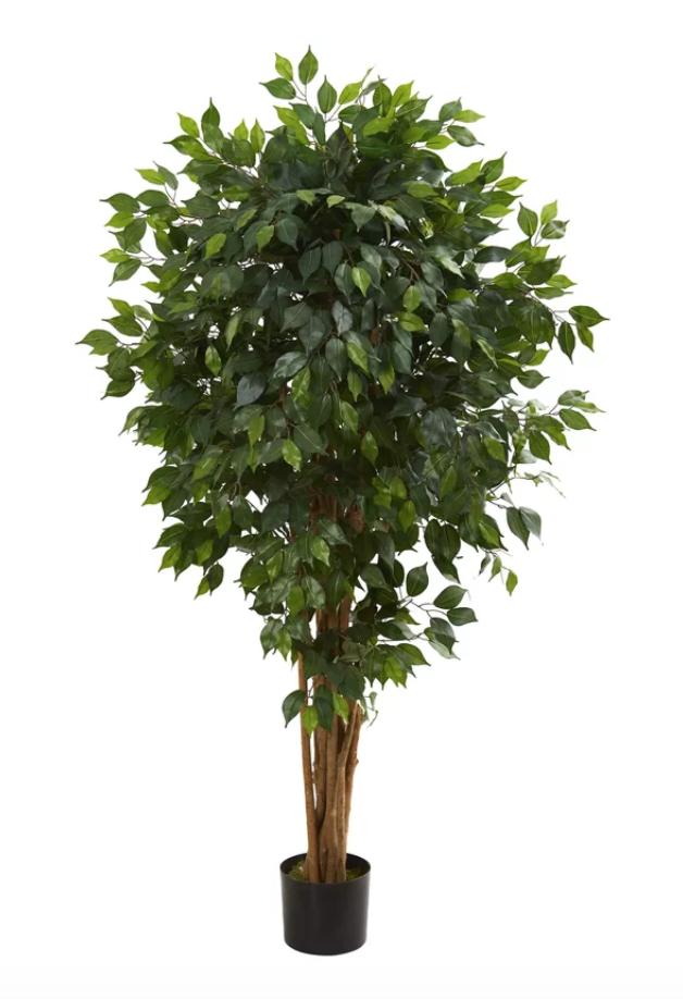Floor Ficus Tree in Planter
