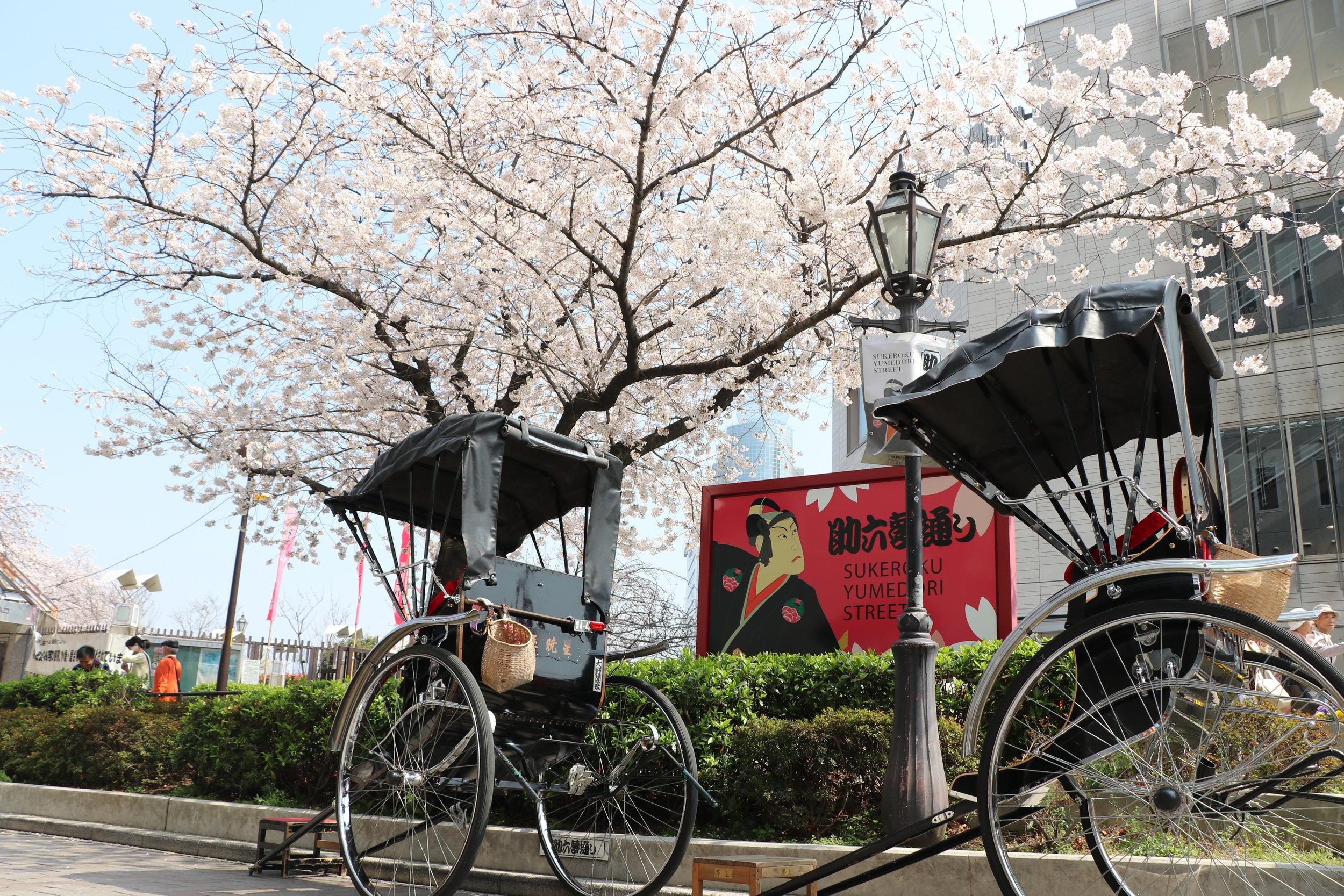 Top 10 Cherry Blossom Tokyo Spots Sumida River
