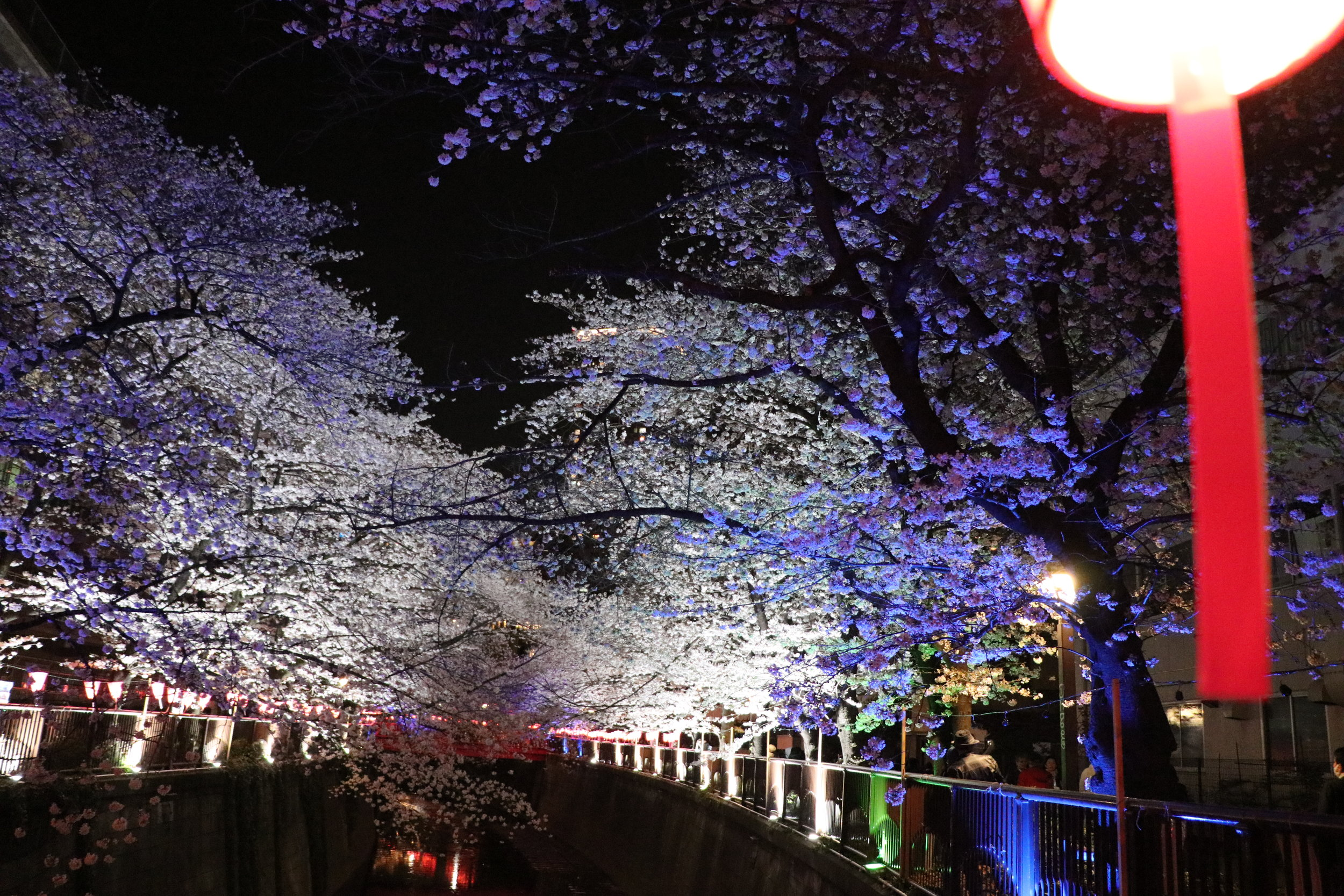 top 10 cherry blossom in tokyo meguro river