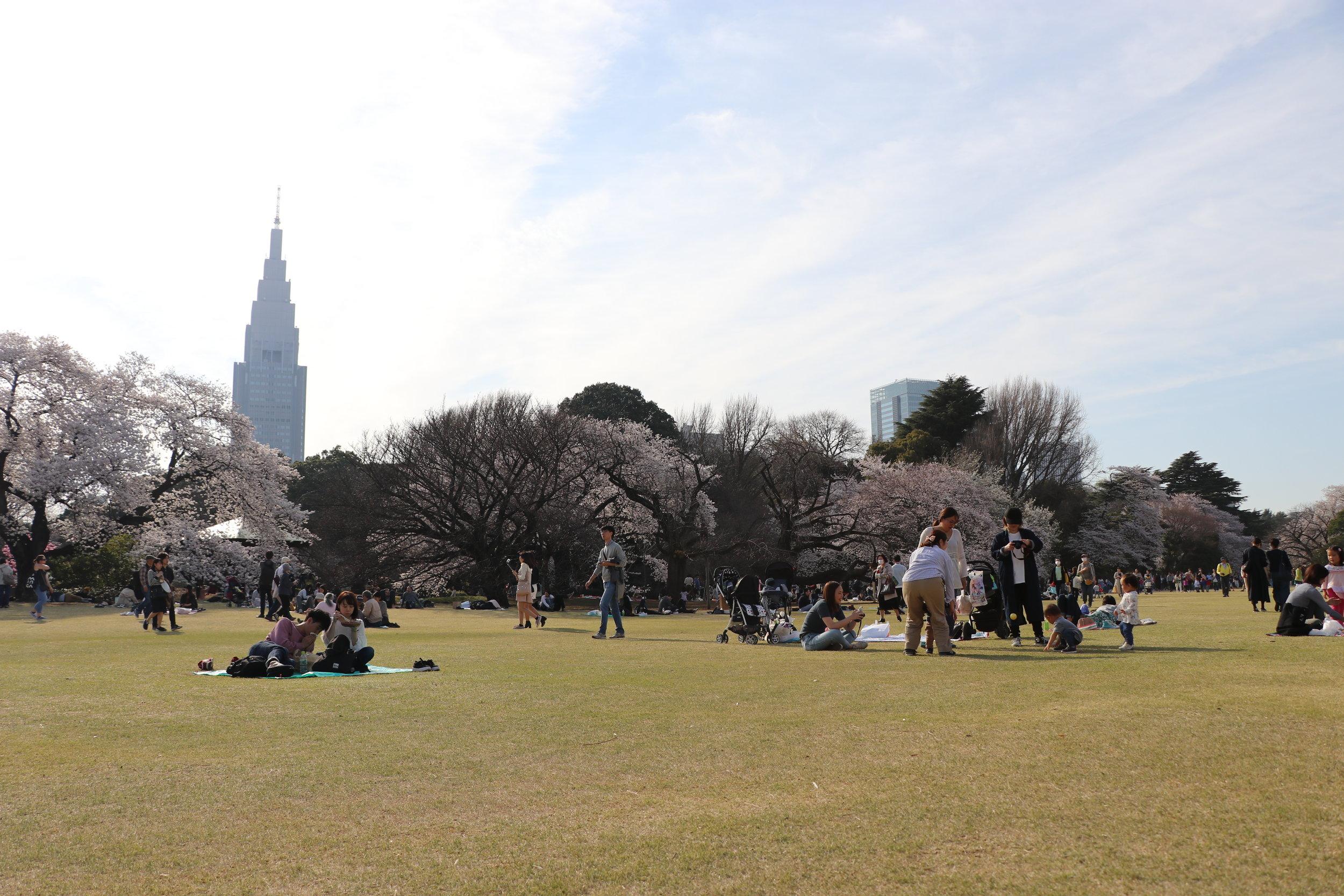 top 10 cherry blossom tokyo spots shinjuku gyoen