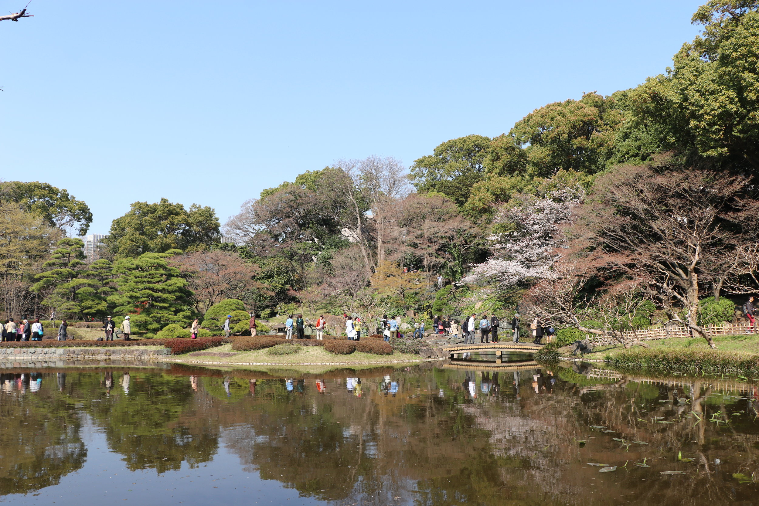 top 10 cherry blossom tokyo imperial palace
