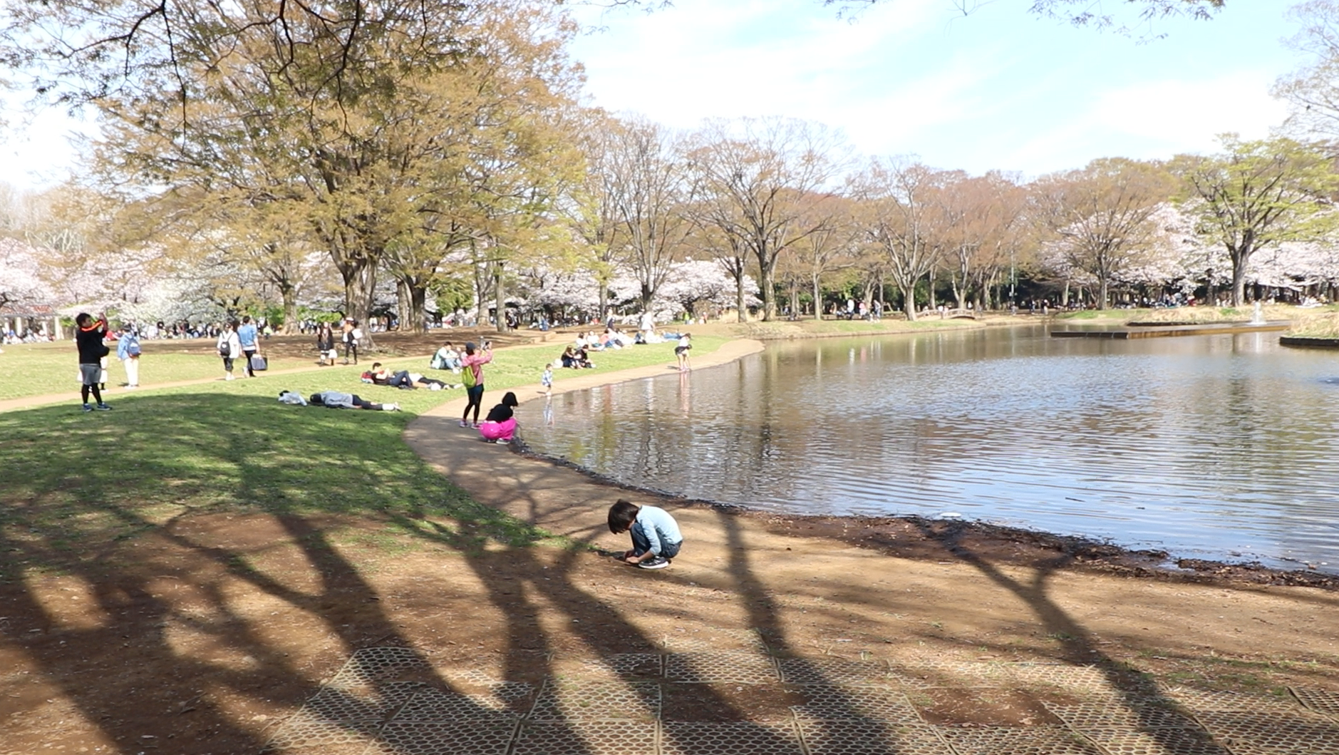 top 10 cherry blossom yoyogi park