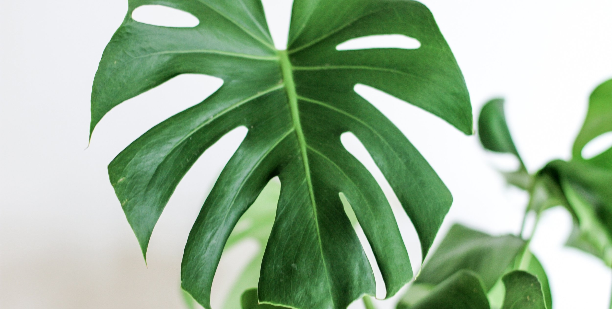 House plants are a great way to improve indoor air quality and reduce exposure to obesogens!