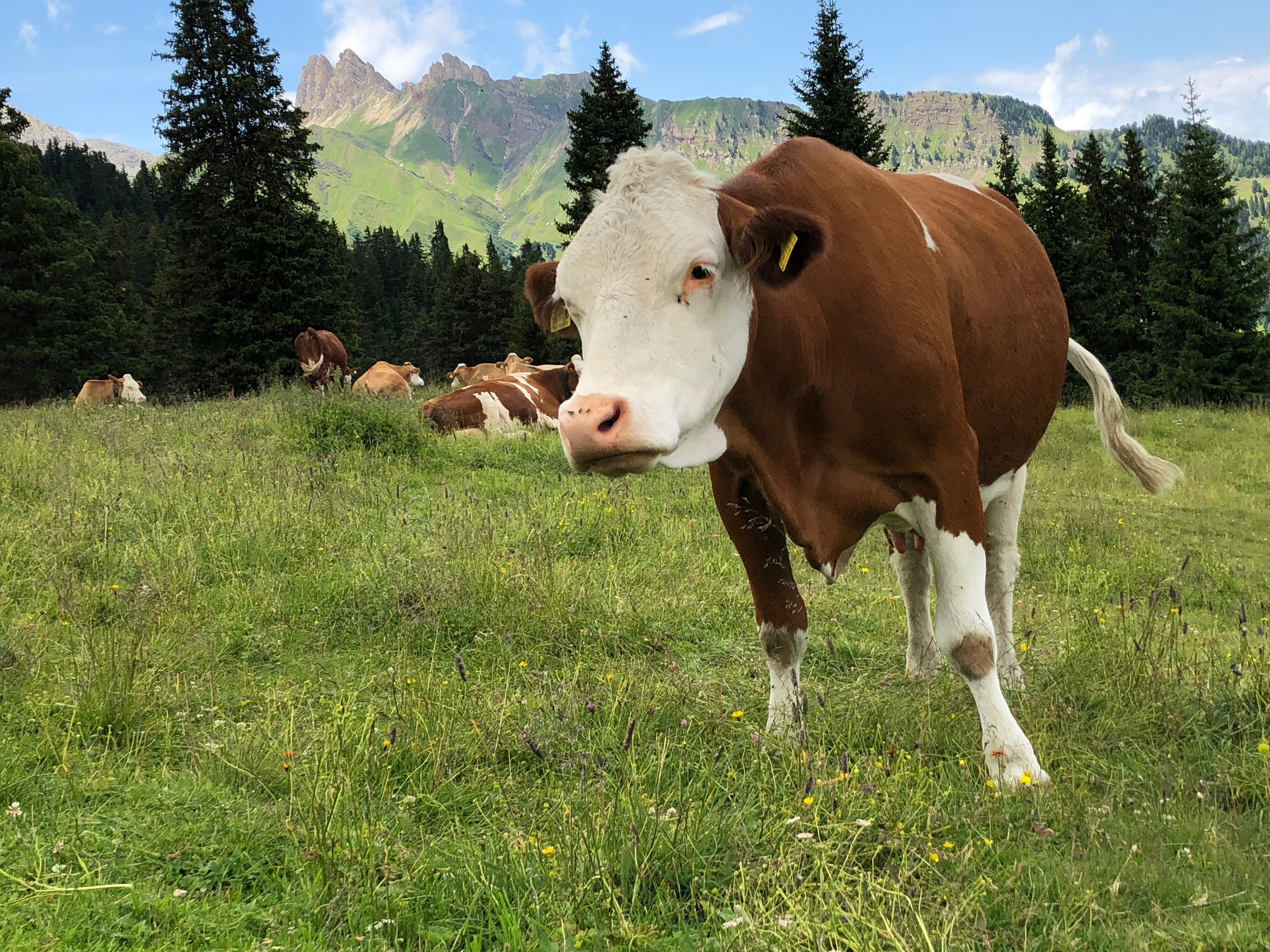 To get the benefits of collagen, it's really important that your supplement comes from grass-fed or pasture-raised animals!