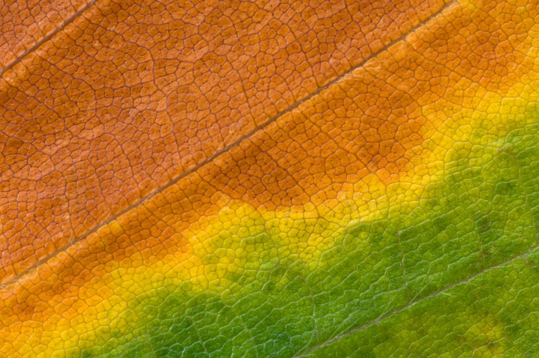 Beech-Leaf-01-1500.jpg