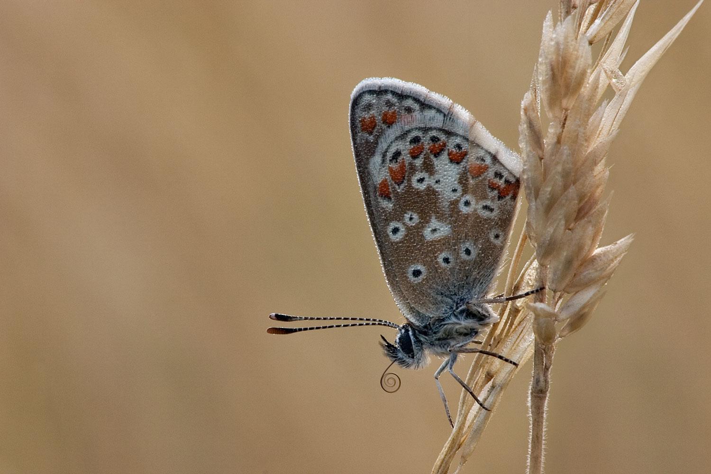 Common-Blue-01-1500.jpg