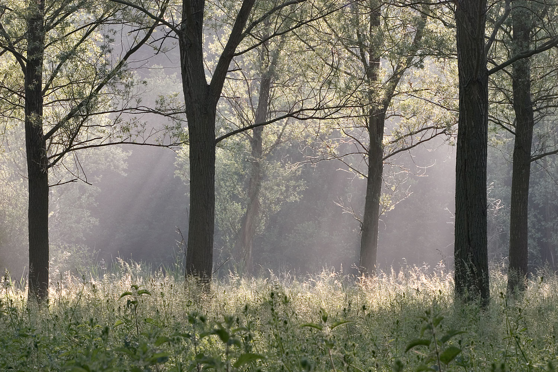 Cricket-Bat-Willow-Grove-01-1500.jpg