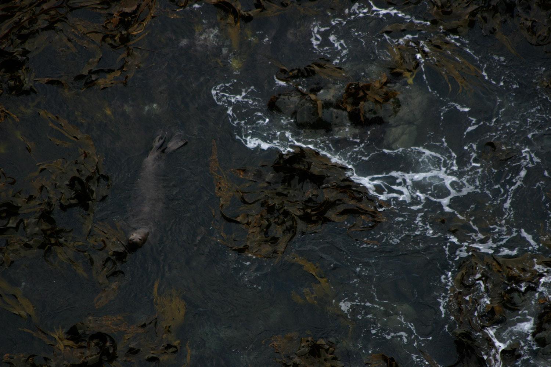 Elephant-Seal-01-1500.jpg