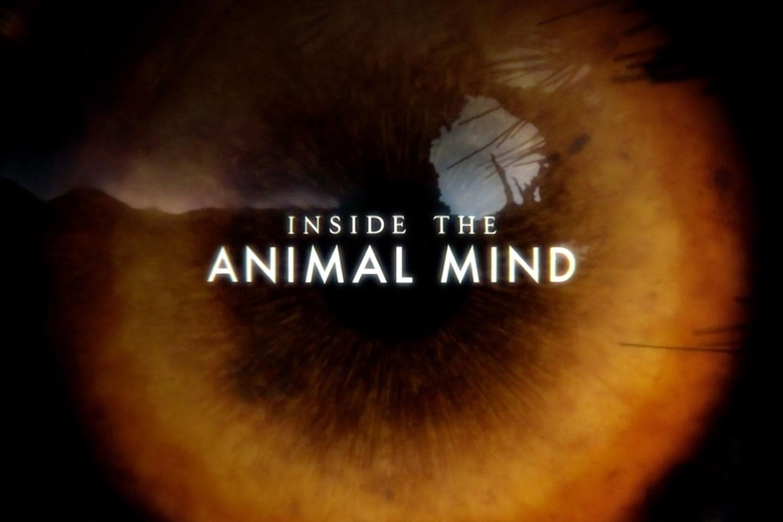 Inside-the-Animal-Mind-Logo.jpg