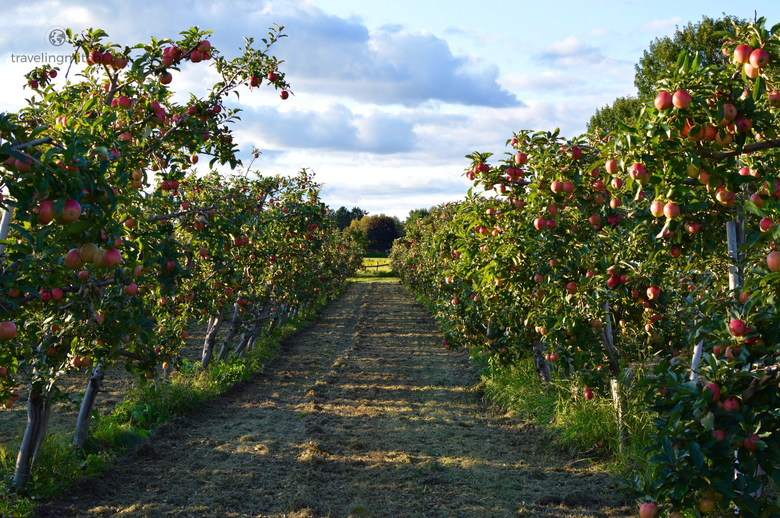 As if the scenery wasn't beautiful enough, why not add an orchard to the mix? (Orono, Ontario)2