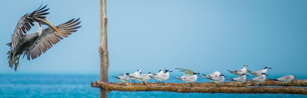 There is a ton of wildlife and birds on Holbox Island!