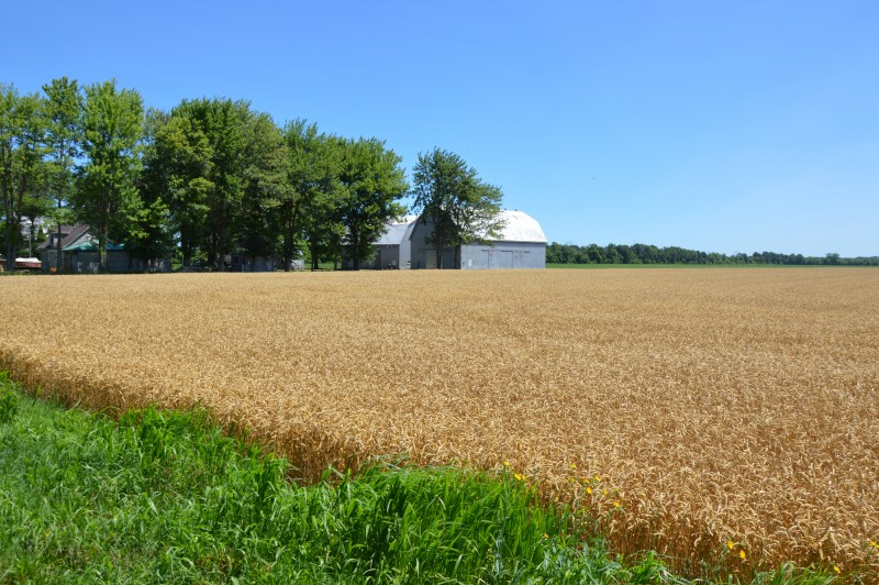 Things to do on Pelee Island