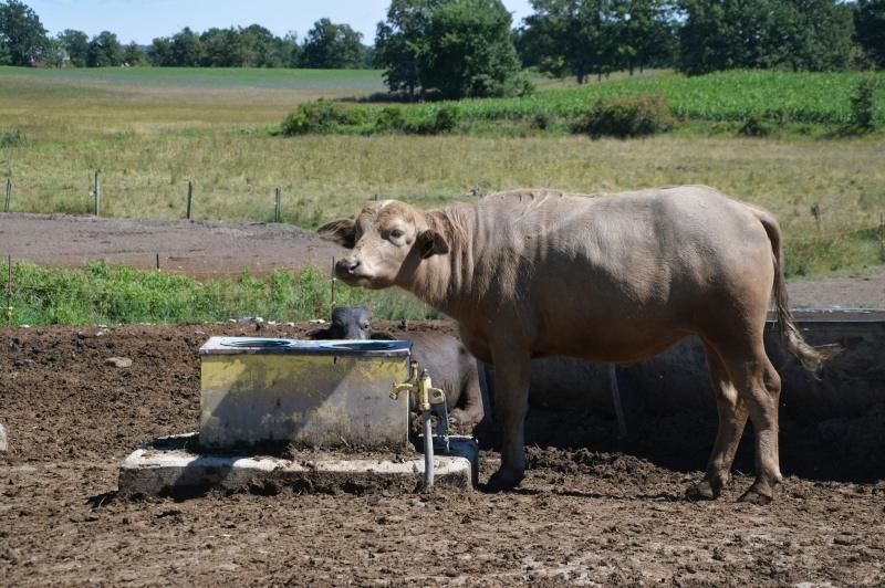 Ontario's Highlands - Ontario Water Buffalo Company