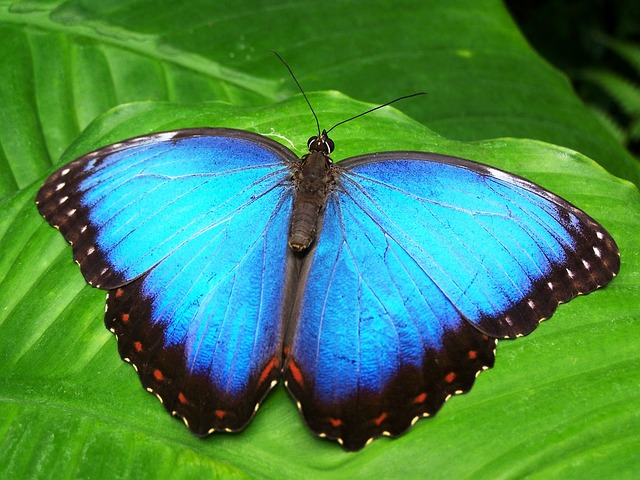 There are so many Niagara Falls attractions, such as the Niagara Parks Butterfly Conservatory that make Niagara Falls the perfect romantic weekend in Ontario