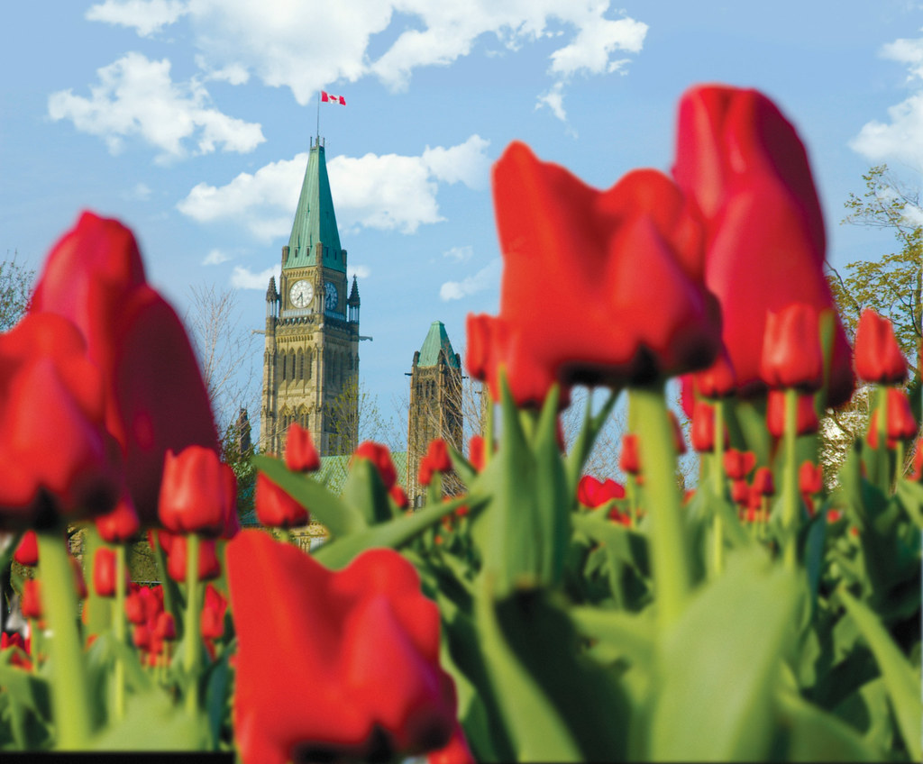 These spring tulips on Parliament Hill were past of the Canadian Tulip Festival of years passed. ©Ottawa Tourism