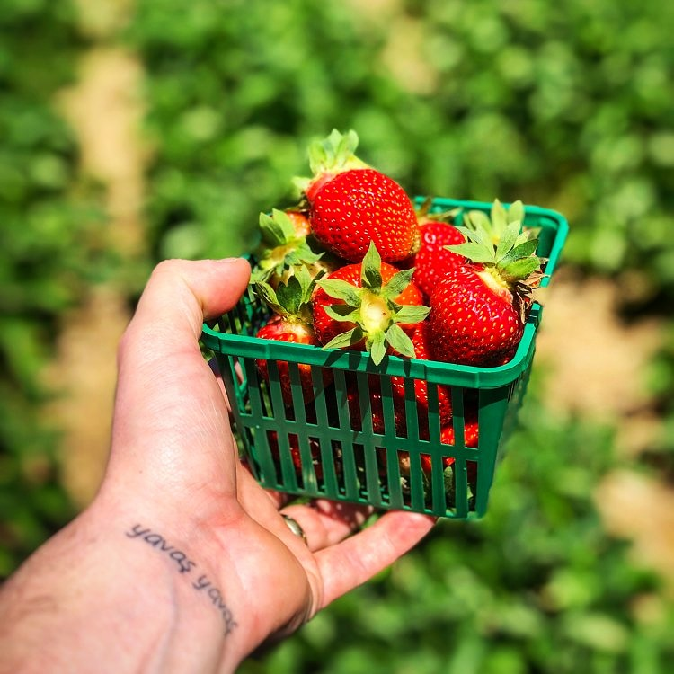 """We had a blast at Kustermans Berry Farms. By the way, for those who don't know- as you can see I have a tattoo on my wrist which is the Turkish phrase """"yavaş yavaş."""" It translates to """"slowly slowly,"""" but really means that in life we need to both exercise patience and respect fate."""