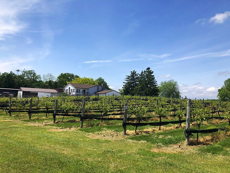 Quai Du Vin Winery is the oldest winery in Elgin County and not far from Port Stanley!