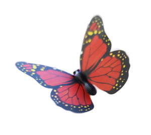 butterfly 1 copy.png