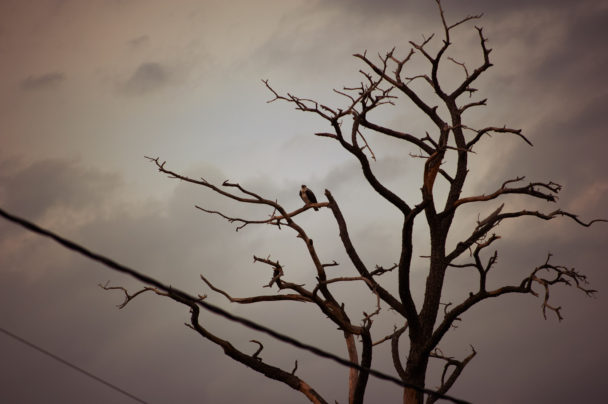 sarah_neale_photography_art_4.jpg